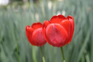 Warna-Merah-pada-Web-Desain-dan-Grafis-10-warna-yang-mempengaruhi-sales-dan-marketing