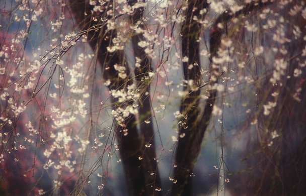 04 - National Geographic Photo Contest 2013 - Sakura