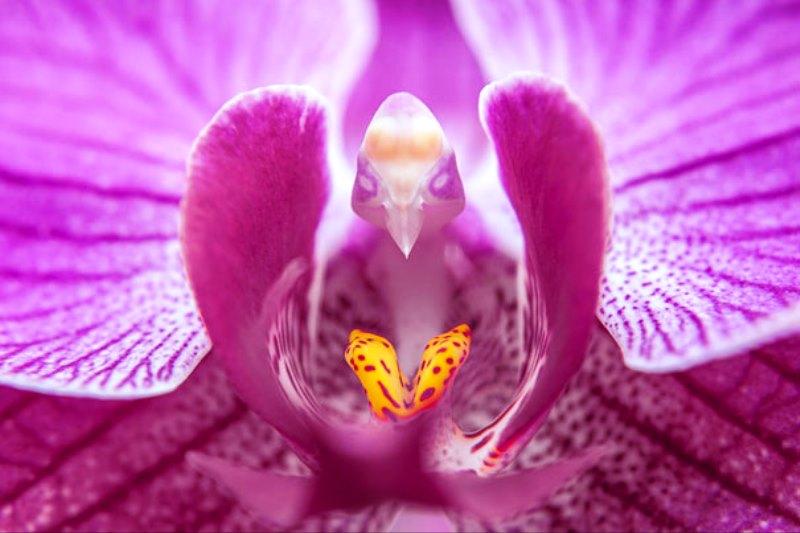Bunga Anggrek Bulan - Seperti Burung 2