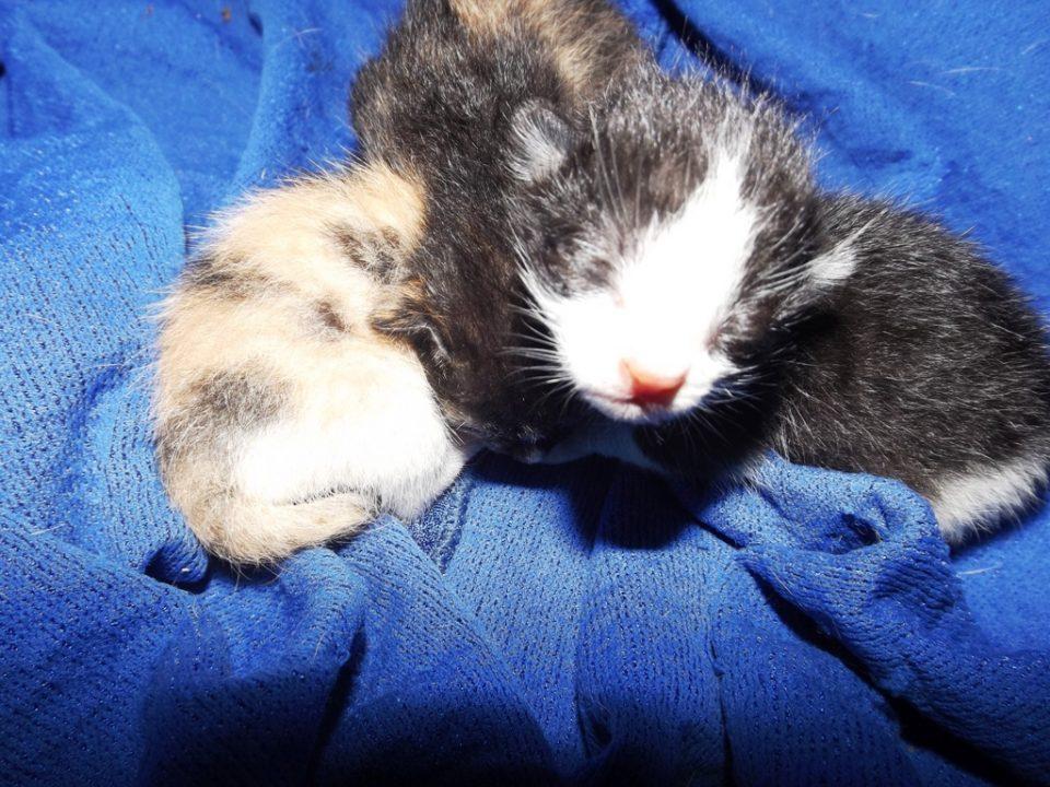 Foto Pose Kucing