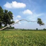 Foto Sawah di Karawang