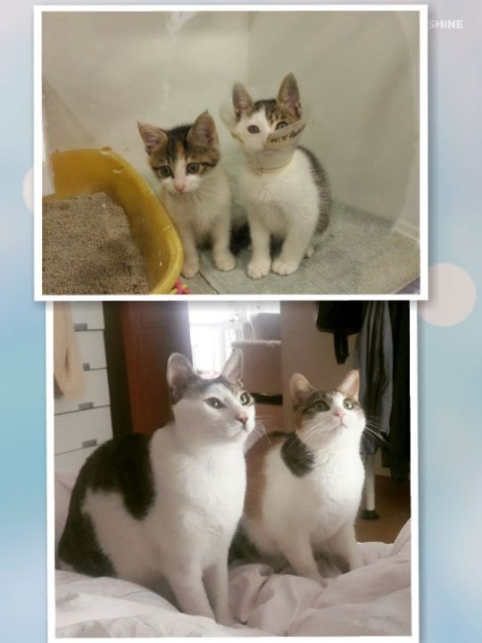 Cats Photograph Before After